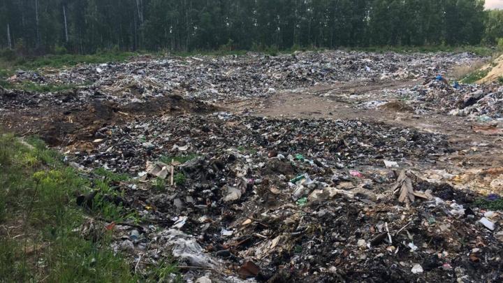 Лес под Челябинском залили фекальными стоками