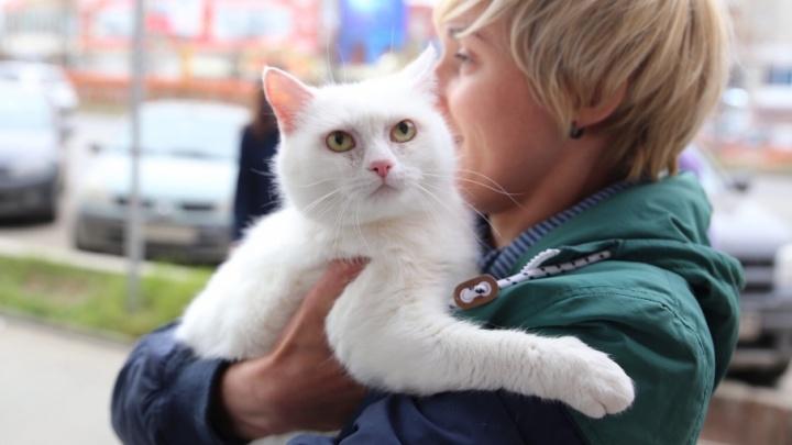 Благодаря «Котофесту» 14 пермских котиков и три собаки обрели дом