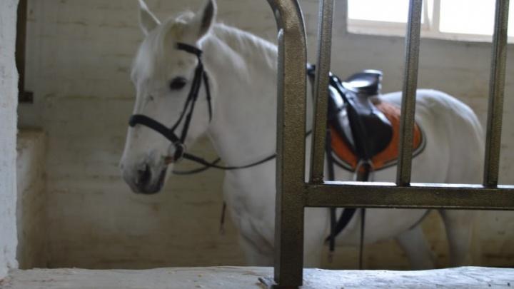 Сено лежит слишком близко к опорам ЛЭП: пермские энергетики подали в суд на конный клуб