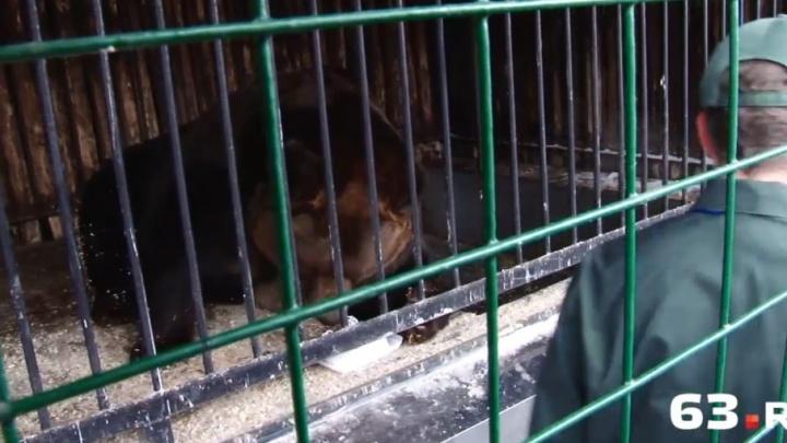 Медведю Умке из самарского зоопарка приготовят торт на юбилей