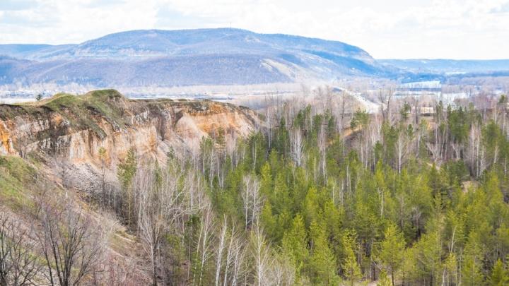 Жителей Самарской области просят не отдыхать в лесу: хвою обработают химикатами