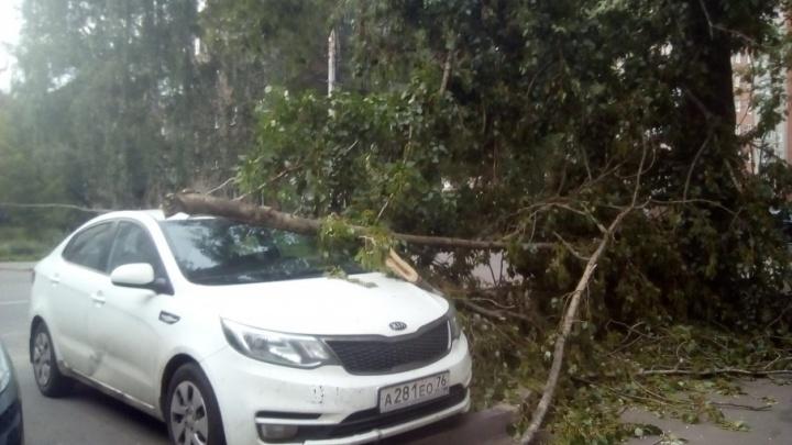Огромное дерево рухнуло на машину во время сильного ветра в Ярославле