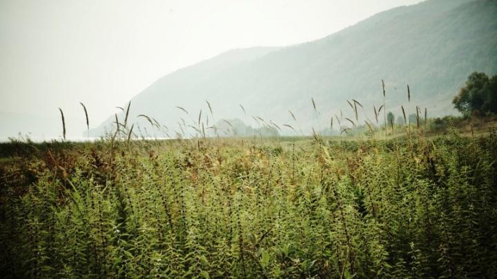 Самарцы отметили именины Жигулевских гор и поднялись на Уркину гору