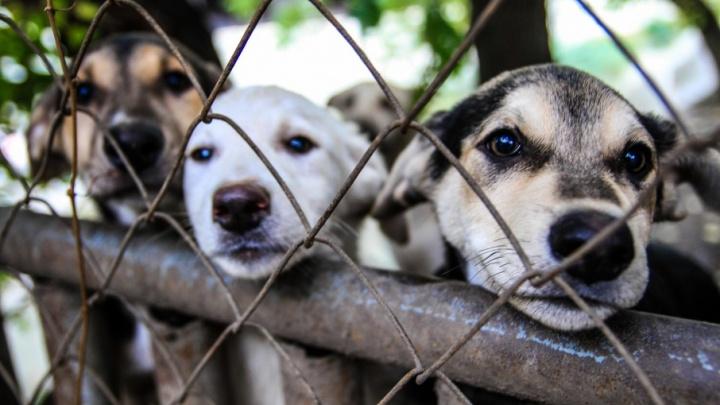 Трогать ее не моги: на Дону живодеры начали получать реальные сроки за издевательства над животными