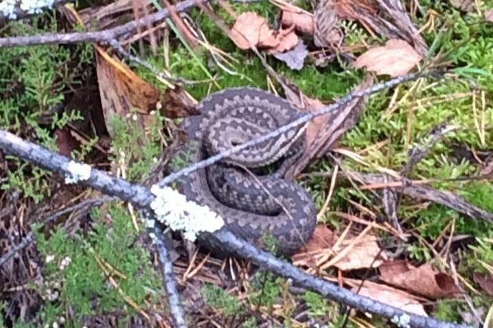 Змеи спят на полянках