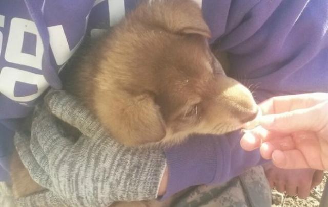 В Перми спасли щенка, который несколько дней провел в дыре под крыльцом