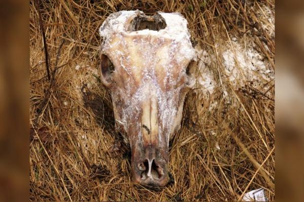 В придорожной канаве лежат и старые трупы животных, и относительно свежие