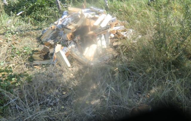 Решил баньку истопить: житель Самарской области попал под статью за вырубку берез в лесу