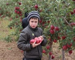 Воспитанники детского дома узнали, как яблоки становятся соком