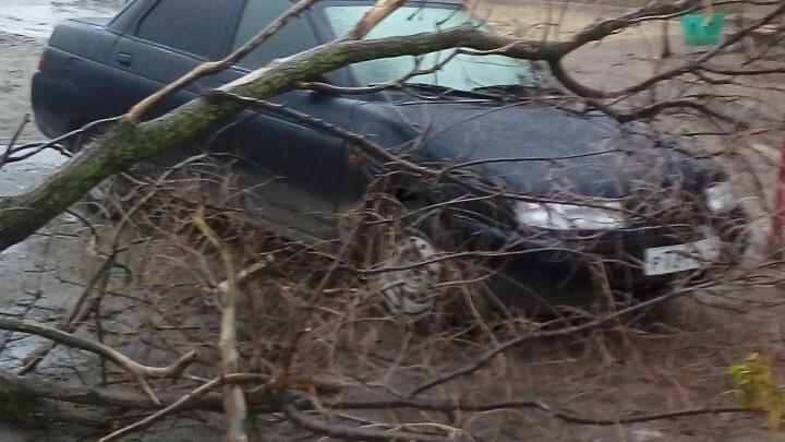 Сильный ветер на севере Волгограда крушит деревья и «калечит» машины