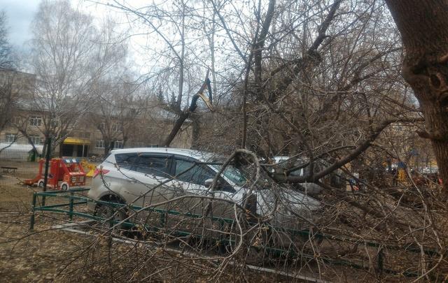 Упавшее дерево помяло кроссовер, припаркованный у дома №133 по улице Республики