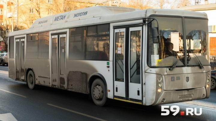 «Нужна оптимизация»: минтранс Прикамья летом отменит девять автобусных маршрутов в сторону Краснокамска