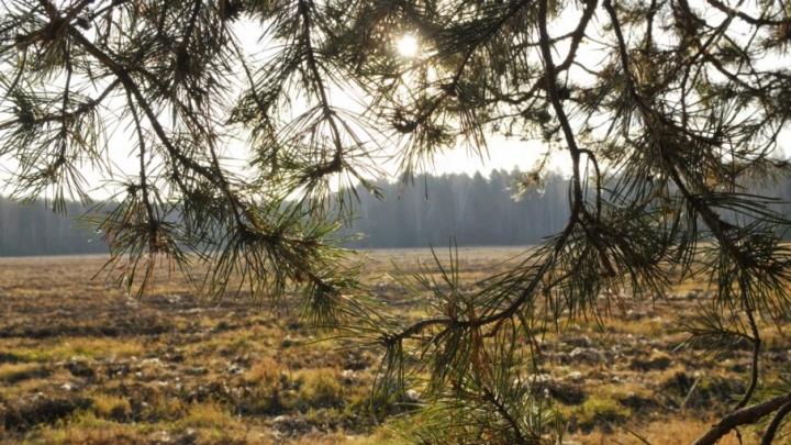 Участки от 6 соток в окружении заповедного леса от 300 тысяч рублей
