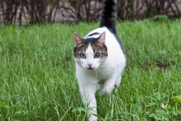 Кота Марсика всегда будут вспоминать с теплотой и любовью