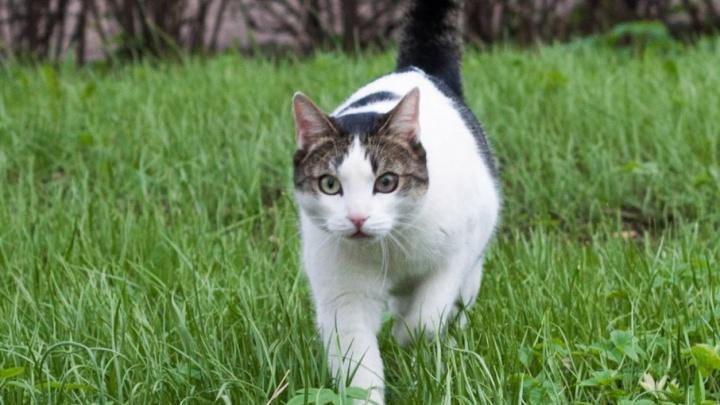 «Он был добрым, хорошим, энергичным»: скончался кот-талисман пермского госуниверситета Марсик