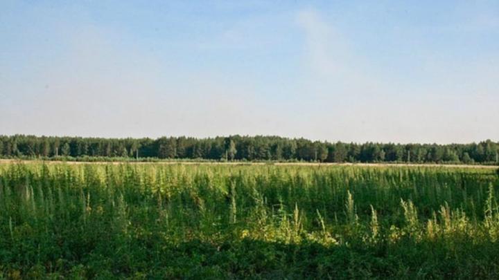 «Пятница» радует ценами: последняя возможность стать хозяином земли за 135 тысяч рублей