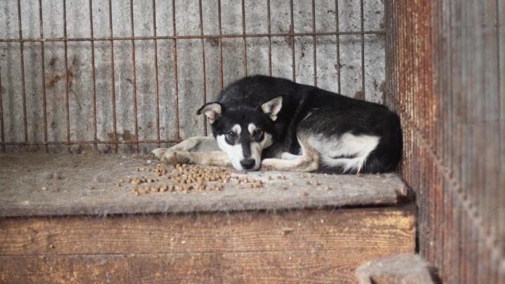 Зоозащитники, чиновники и депутаты: кто выберет директора пермского муниципального приюта для животных