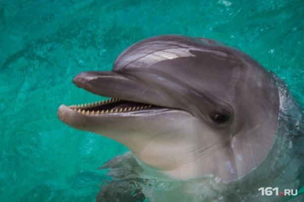 На этих выходных ростовчане и гости города смогут посмотреть шоу дельфинов