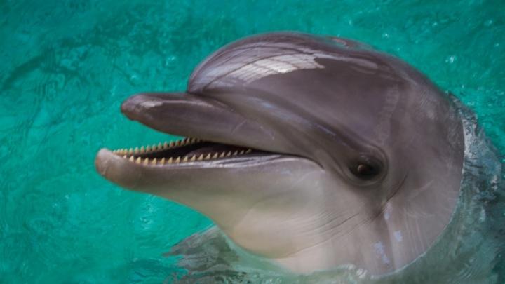 Хоккей, гандбол и шоу дельфинов: как провести выходные в Ростове