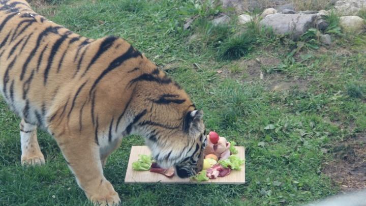 Тигр в коробочке и игуана со сломанной челюстью: пять историй чудесного спасения обитателей зоопарка