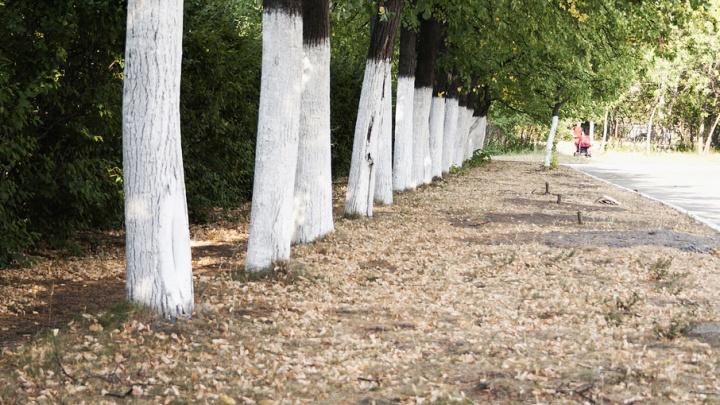 В потасовке подростков в парке Тищенко исключили версию об уколе шприцем