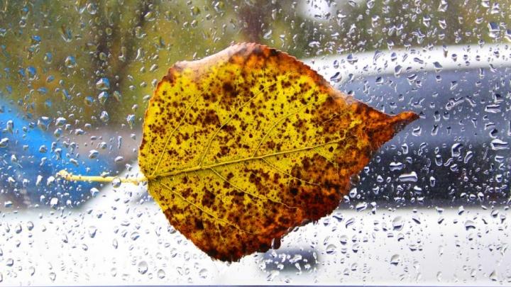 Дождь и снег: на выходные в Самаре обещают небольшое потепление