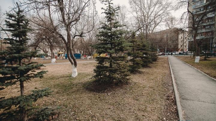 Экологи спасли от вырубки 27 деревьев на площади у драмтеатра