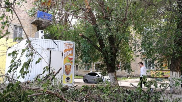 Рядом с администрацией Тракторозаводского района упал старый вяз