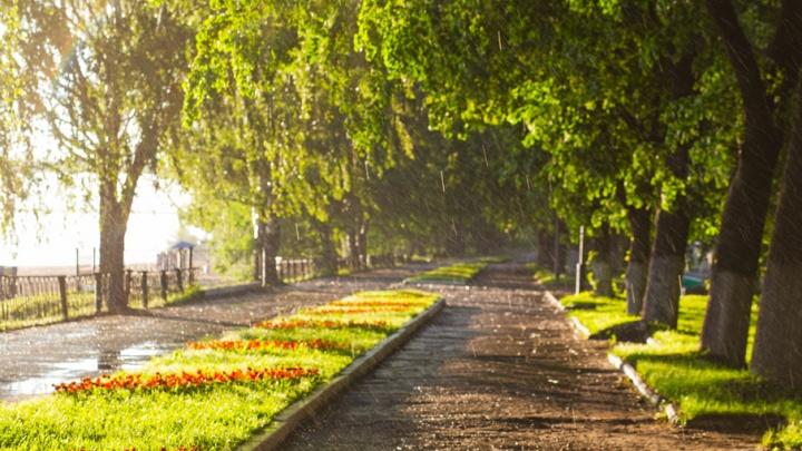 Ярославцев ждет дождливая неделя