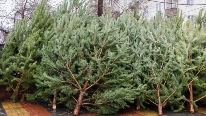 Волгоград стал кладбищем для одиноких елок