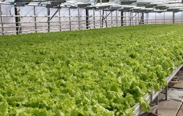 В Северодвинске возобновил работу агрокомбинат