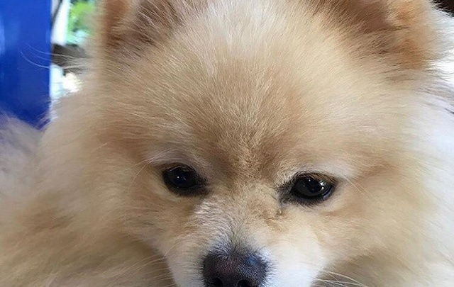 Ростовчанка отказалась от iPhone 7 за найденную собаку