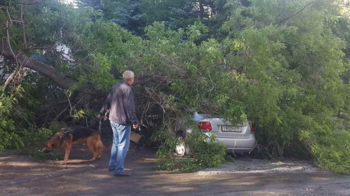 Челябинец третий день добивается вызволения машины из-под поваленного ветром дерева