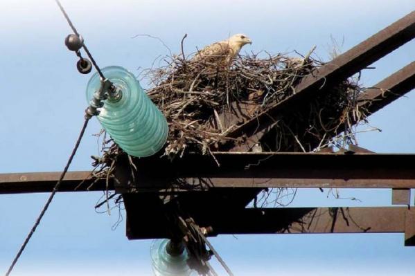 За три года в Волгоградской области от удара током погибли 15  редких птиц