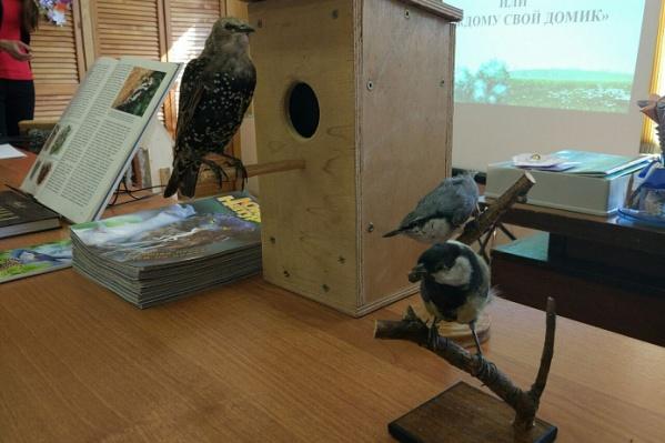Скворечники колотят для разных птиц