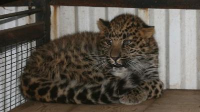 В Самаре сотрудники ТЦ пожаловались на жестокое обращение с животными в контактном зоопарке