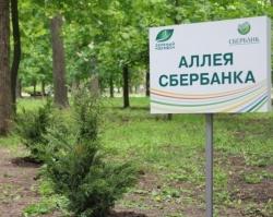 В Ростове высадили можжевеловую аллею в преддверии «Зеленого марафона»