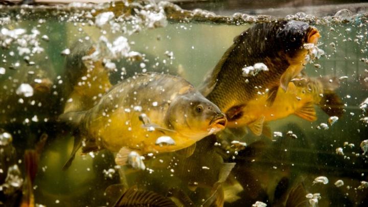 О чем молчит рыба: секреты и тайны рыбного производства