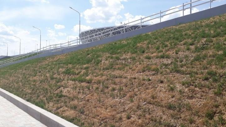 На новой набережной под «Волгоград Ареной» без полива сохнет свежий газон