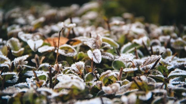 Зима очень близко: в Ростове выпал первый снег