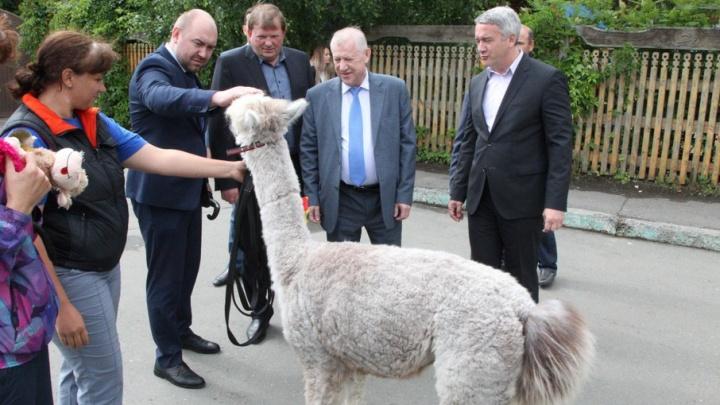 Площадь челябинского зоопарка увеличится на восемь гектаров