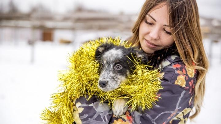Здоровья, денег и щеночка: что ярославцы попросили на Новый год