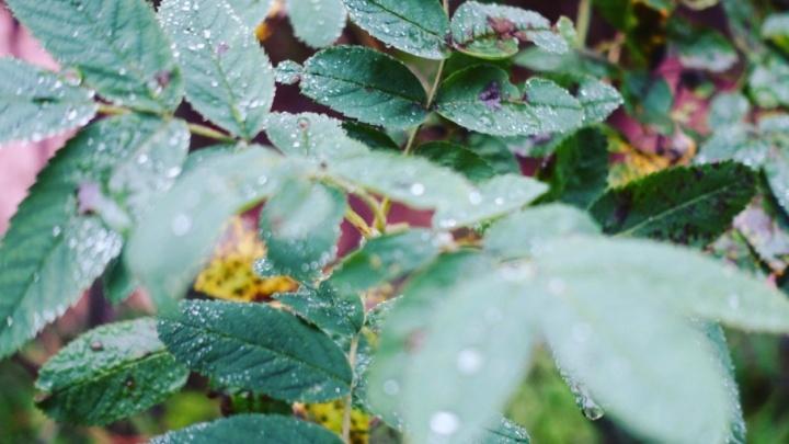 Последний день лета Поморье проводит дождями и крепким ветром
