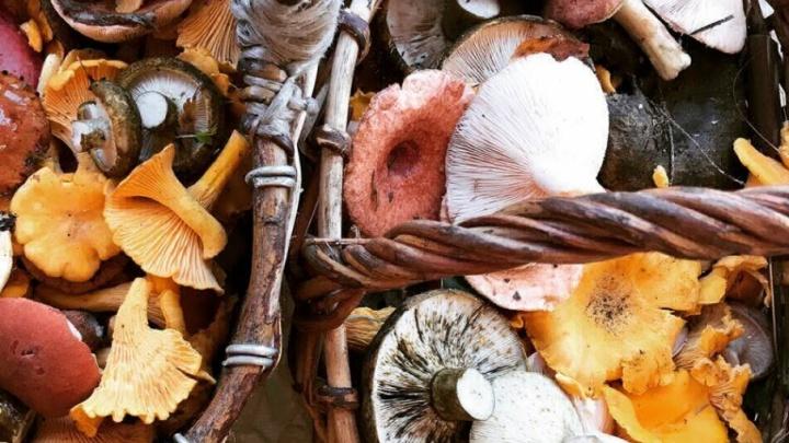 В ярославских лесах пошла грибная волна