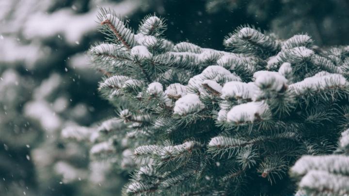 Мороз крепчает: прогноз погоды в Тюмени на выходные