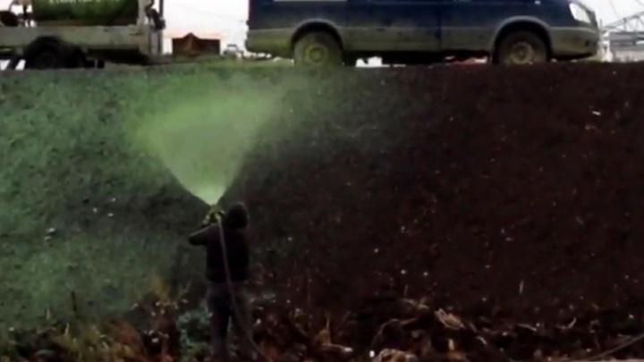 В Самаре на Ташкентской  рабочие «красили» траву в зеленый