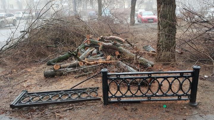 В центре Волгограда вместе со старыми деревьями спилили чугунные решетки