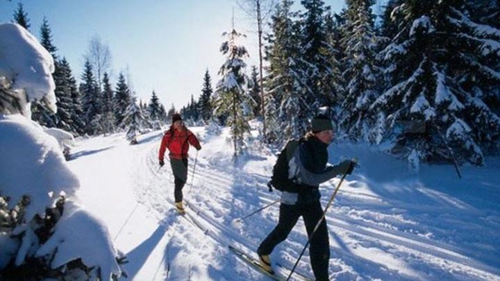 Снег привозят в лес на телегах: на Уктусе начали готовить трассы для беговых лыж