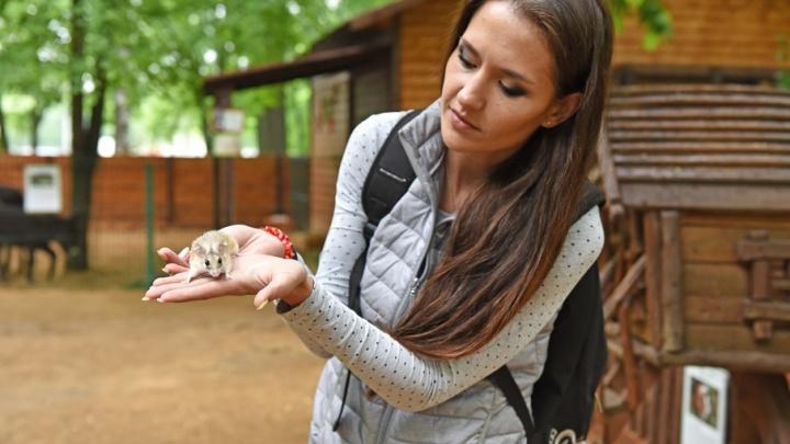 Ярославцам бесплатно раздали иглистых мышей