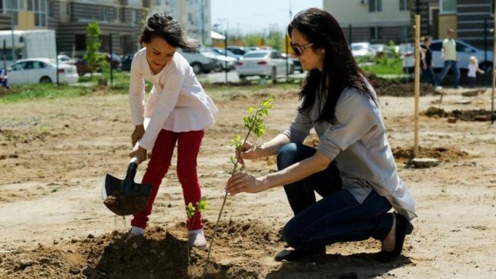 Новый способ познакомиться — посадить вместе дерево